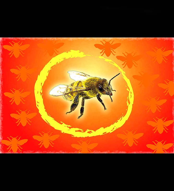 One Bee Lives Image
